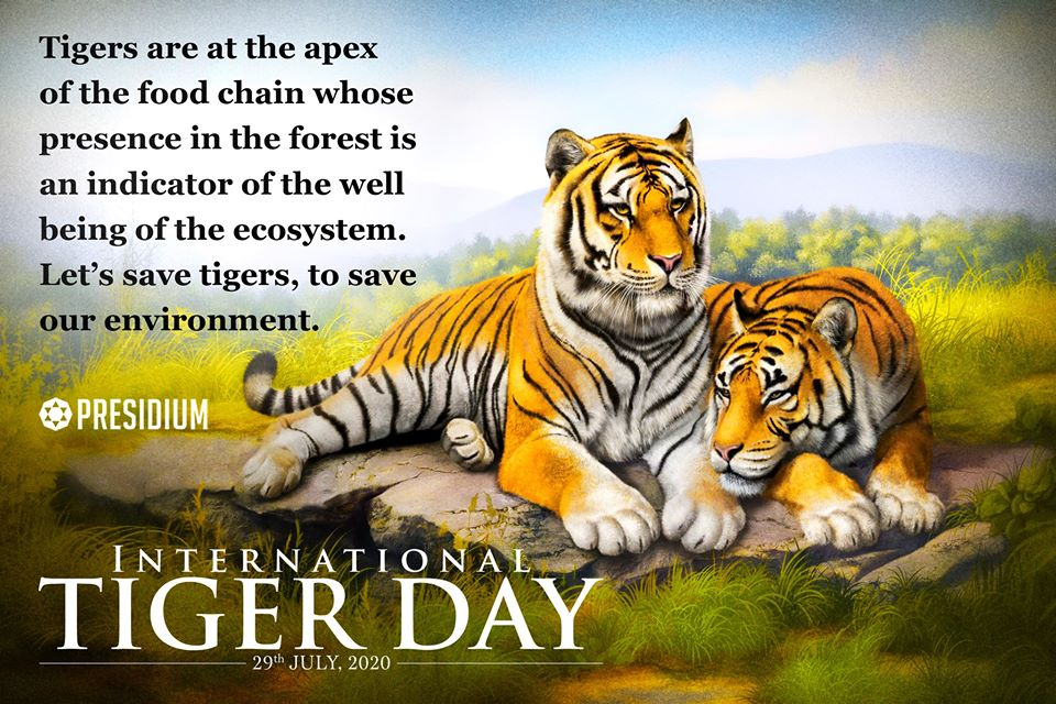 INTERNATIONAL TIGER DAY: SAVE THE ROAR OF THE JUNGLE!