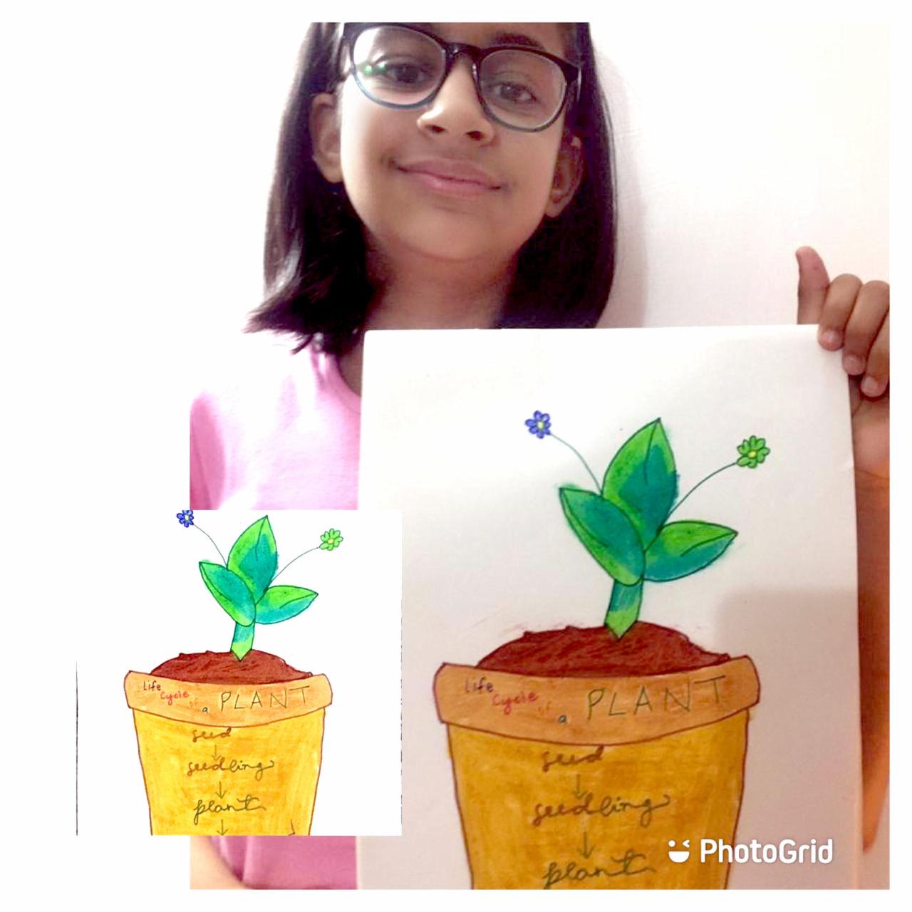 CHARACTERISTICS OF PLANTS 2020