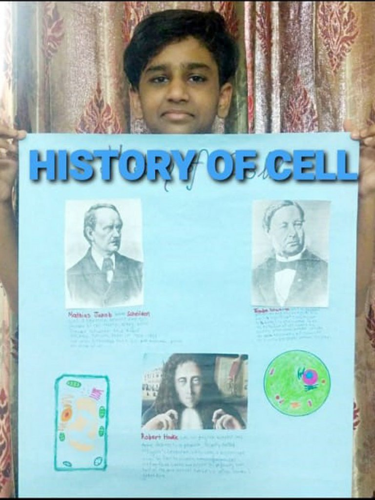 DIFFERENCE BETWEEN ANIMAL & PLANT CELL! 2020