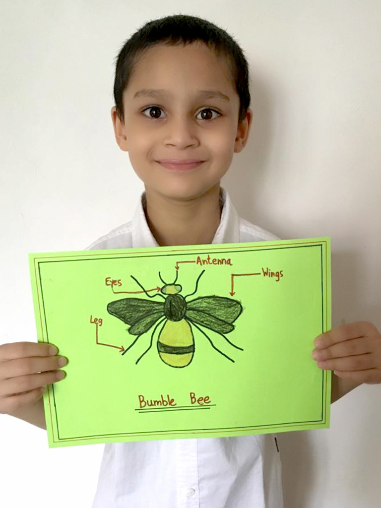 TBL - Insects G3