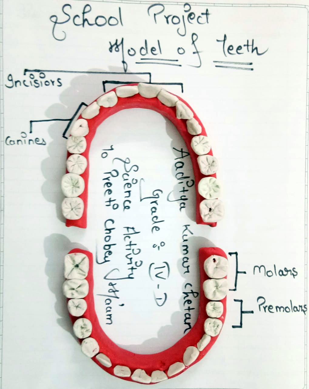 TEETH STRUCTURE