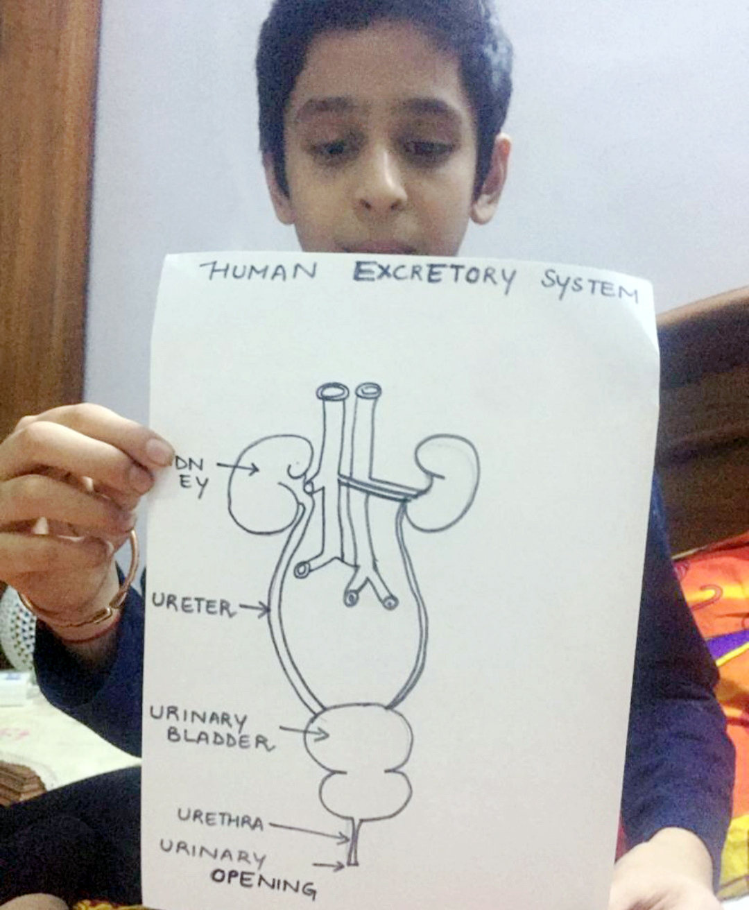 HUMAN HEART & EXCRETORY SYSTEM IN DEPTH